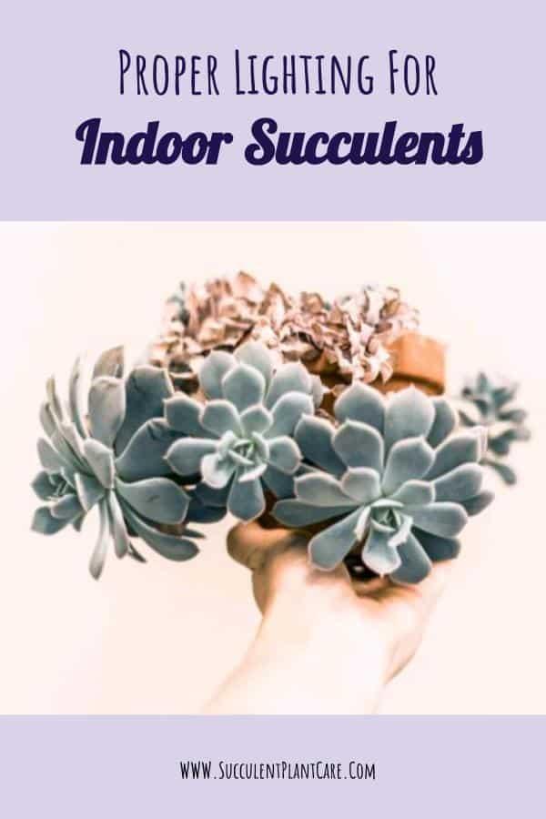 blue succulents cascading down a pot