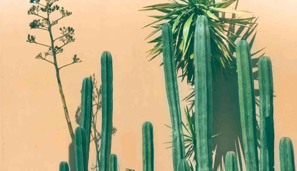 Top 12 Cacti and Succulents for Full Sun