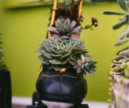 Benefits of Growing Succulents/Why Are They So Popular?