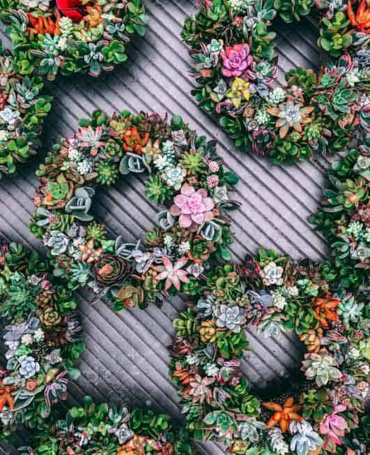 wreath succulents