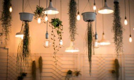 Eco-Friendly Succulent Gardening