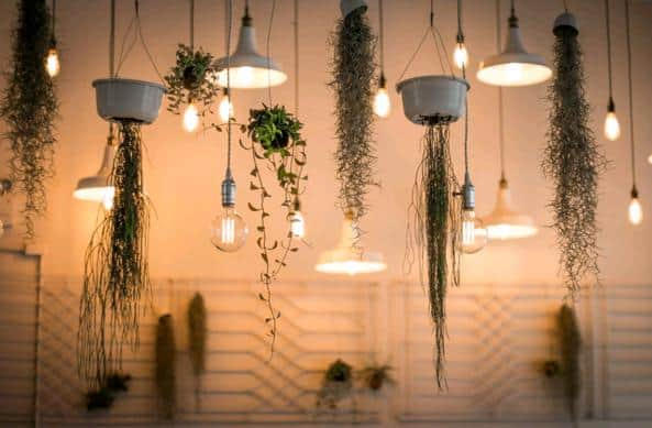 succulents in light fixtures