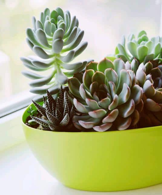 Proper Lighting for Succulents Indoors