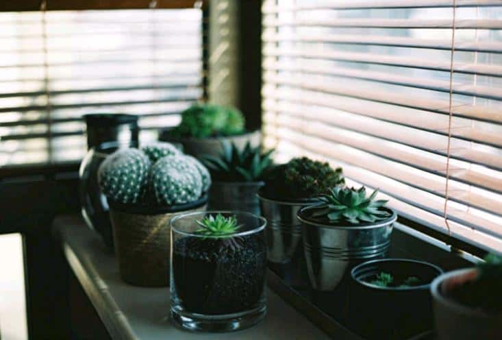 Succulents and cacti growing indoors