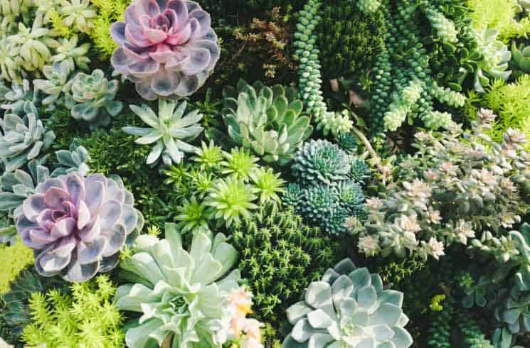 What Are Succulent Plants And Where Are They From?