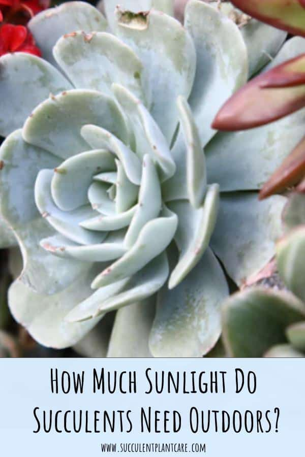 How Much Sunlight Do Succulents Need Outdoors?