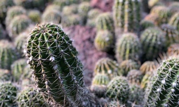 Optimal Temperatures for Succulents to Survive and Thrive