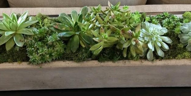 How to Grow Succulents in Pots Without Drainage Holes