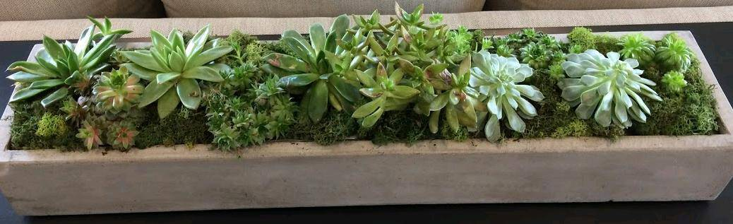 how to grow succulents in pots without drainage holes succulent plants and care. Black Bedroom Furniture Sets. Home Design Ideas