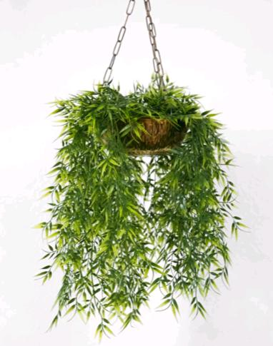 hanging baskets for succulents