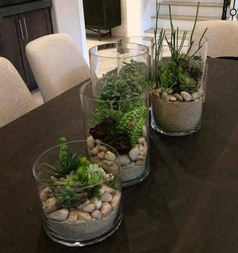 Best Soil And Fertilizer For Cacti And Succulents Succulent
