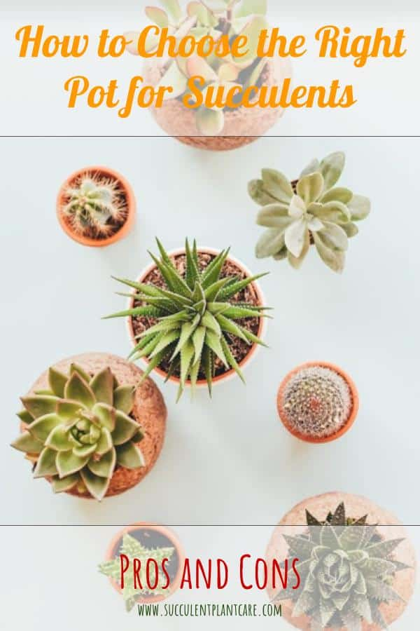 Choosing the Right Pot for Succulents: Pros and Cons