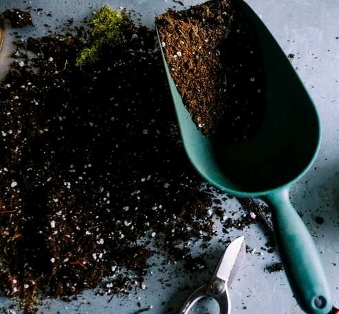 soil recipe for succulents