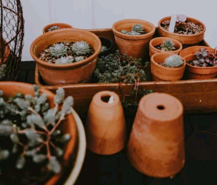 terracotta pots for succulents