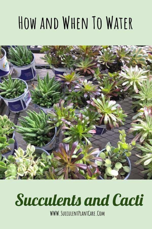assorted succulents in pots