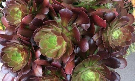 13 Hardy, Hard-to-Kill Succulents