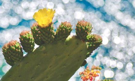 How to Get Succulents and Cacti to Bloom
