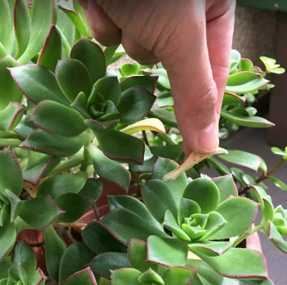Common Problems With Succulents And How To Fix Them