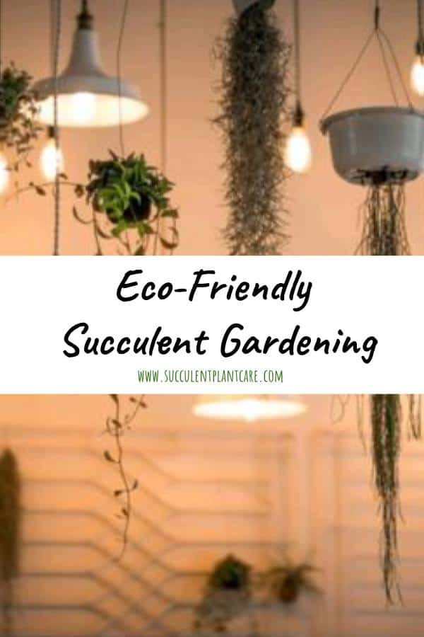 Eco-friendly Succulent Gardening