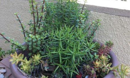 Revamping An Overgrown Succulent Fairy Garden