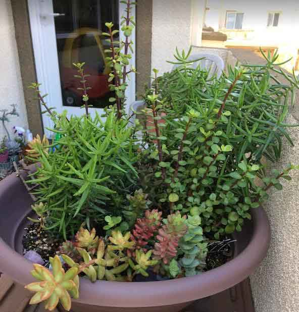 upon closer inspection i was very happy and relieved to see that the plants are healthy and bug free heres how they look from different angles - Fairy Garden Plants