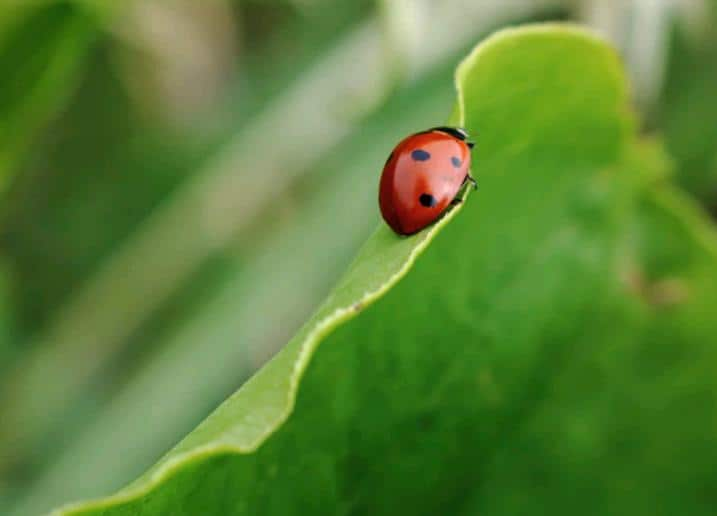 Eco-friendly Succulent Gardening beneficial insects