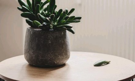 Top 12 Low-Light Succulents and Cacti