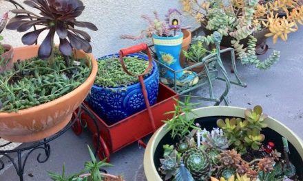 Easiest Way to Propagate Succulents: by Stem Cuttings