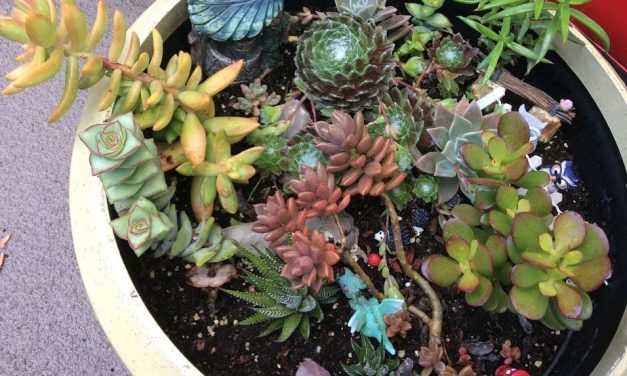 What is Succulent Propagation? My Success Stories