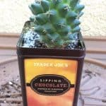 How to Use an Upcycled Tin Can to Pot a Cactus