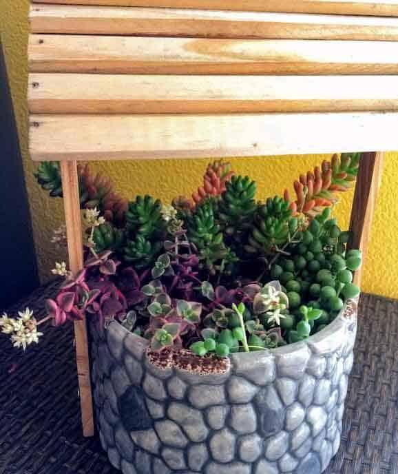 Senecio Rowleyanus 'String of Pearls' trailing plant in well planter