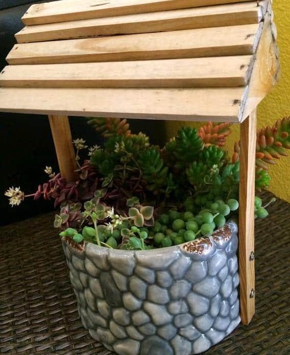 Senecio Rowleyanus 'String of Pearls' in well planter