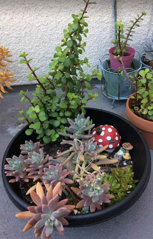 5 Reasons Why We Need to Repot Succulents