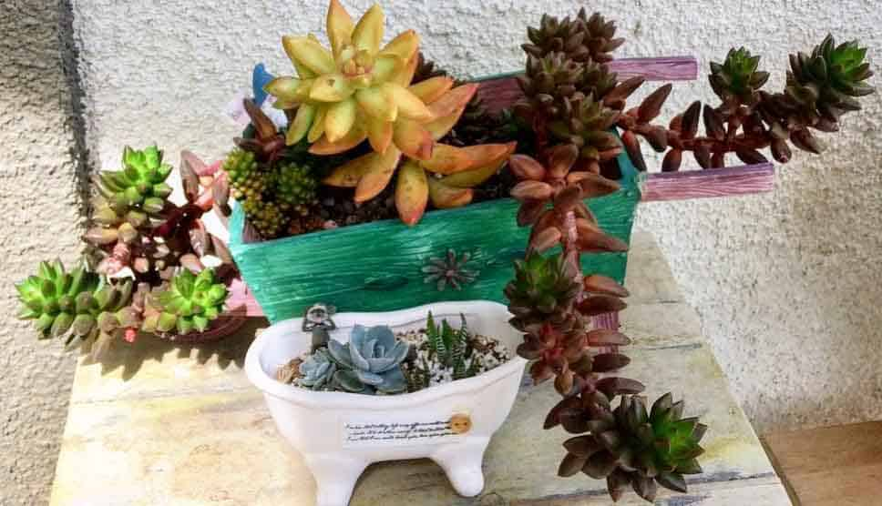how to plant succulents in pots without drainage holes succulent plants and care. Black Bedroom Furniture Sets. Home Design Ideas