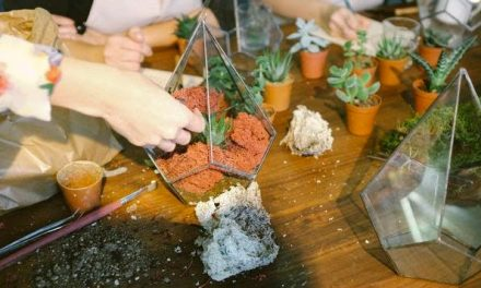 How to Plant Succulents in Pots Without Drainage Holes