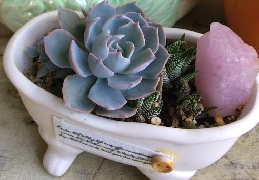Miniature succulents in small pots, mini echeveria, mini haworthias zebra plant