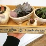 How Long Can Mini Succulents Stay In Small Pots?