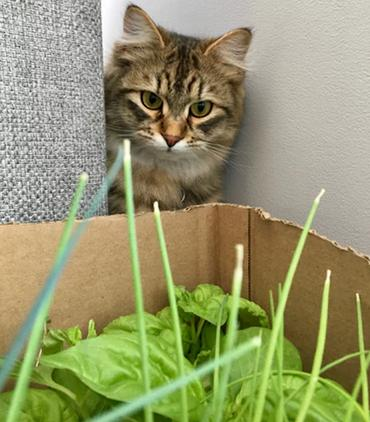 Are Succulents Poisonous To Cats? How To Keep Cats Away From Succulents