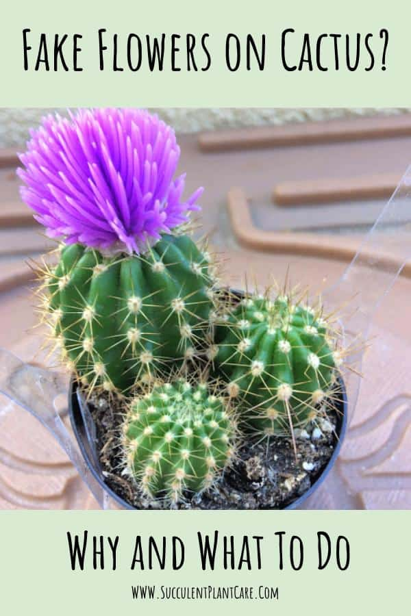 fake flower on a cactus