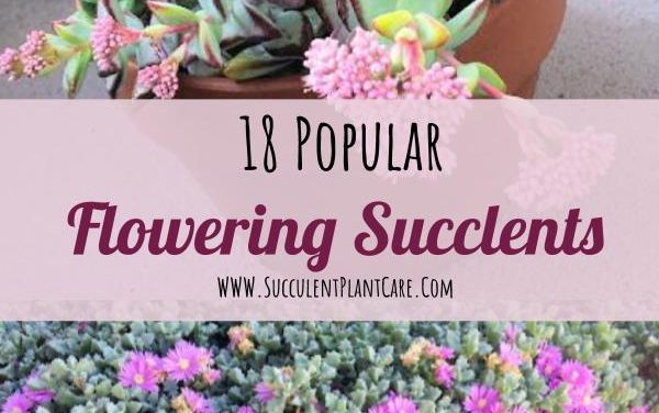 18 Popular Flowering Succulents (With Pictures)